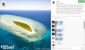 Instagram-Post vom WWF